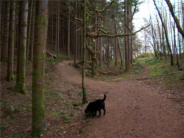 Bienn Lora Forest walk Image